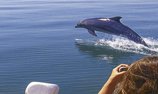 Κορωνησία-Αμβρακικός κόλπος, δεν είναι λίμνη δεν είναι θάλασσα…