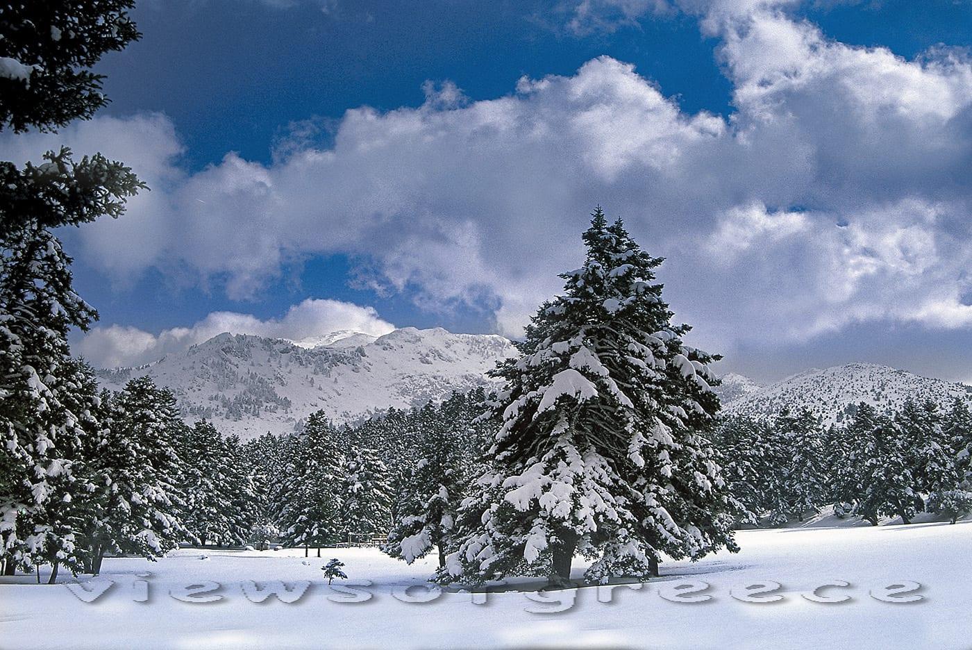 mountain, nature, travel, naturally, greece, plants, highlands, outdoor, forest, flora, Elikonas, Ελικώνας, Βοιωτία, Μούσες, Αγία Άννα, παραλίες, Αρβανίτσα, χλωρίδα