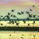Άγνωστη Μαγνησία:  Λίμνη Κάρλα, Κεραμίδι, Βένετο,  η άλλη πλευρά του Πηλίου