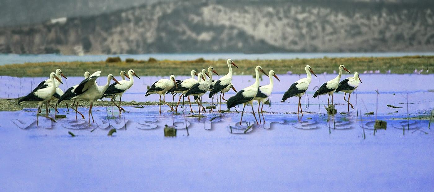 nature, lake, karla, bird, wildlife, greece, sunset, birds, birdwatching, pelion, pilio, pelio, thessaly, summer, village, magnesia, λίμνη Κάρλα, Βόρειο Πήλιο, Κεραμίδι, Καμάρι, Βένετο, παραλίες, σπηλιές, Θεσσαλία, Μαγνησία
