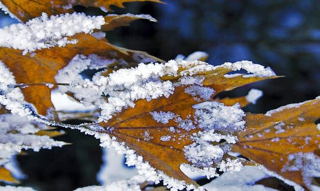 Το πρώτο χιόνι…Snowfall, the first arrival…