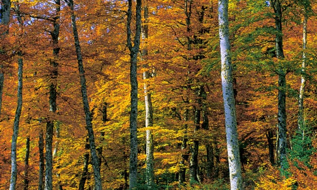 Γλυκό Φθινόπωρο…Autumn still melancholy
