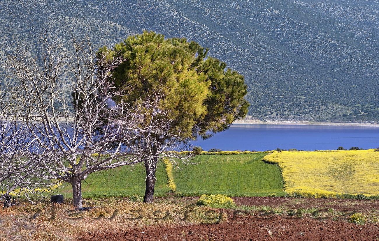 greece, outdoors,landscape, lake near Athens, lake Iliki, lake Paralimni, birdwatching, λίμνη, Υλίκη, Παραλίμνη, μονή Σαγματά, παρατήρηση πουλιών, Βοιωτία, μονοήμερη εκδρομή, διαδρομές