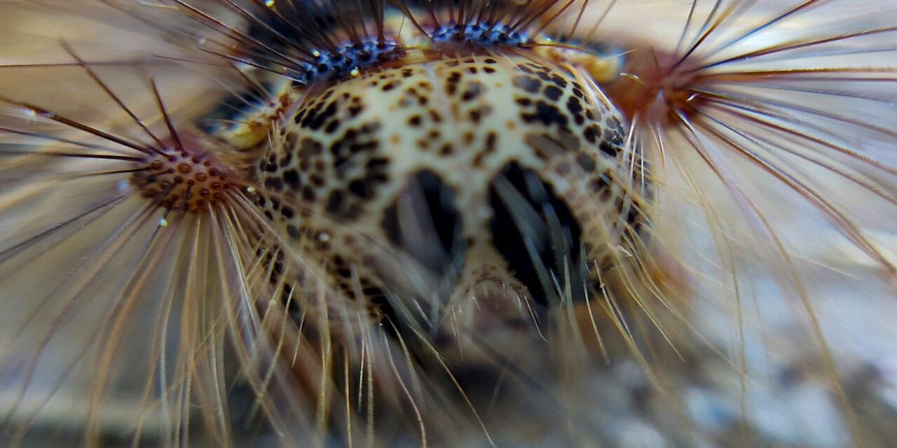 """Gypsy moth Lymantria, ο καιρός των """"τσιγγάνων""""….μια αλλιώτικη """"πανδημία""""!"""