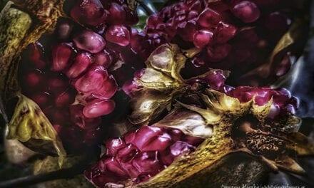 Punica granatum (ρόδι)