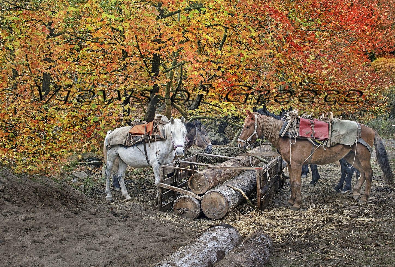 greece, architecture, kleisoura, christianity, moni, nature, forest, mountain, Κλεισούρα Καστοριάς, Βλαχοκλειοσυρα, όρος Μουρίκι, μονή Πανάγιας Κλεισούρας, δυτική μακεδονικά, παραδοσιακό χωριό, άγνωστος ορεινός προορισμός, Αρκτούρος, κέντρο περίθαλψης