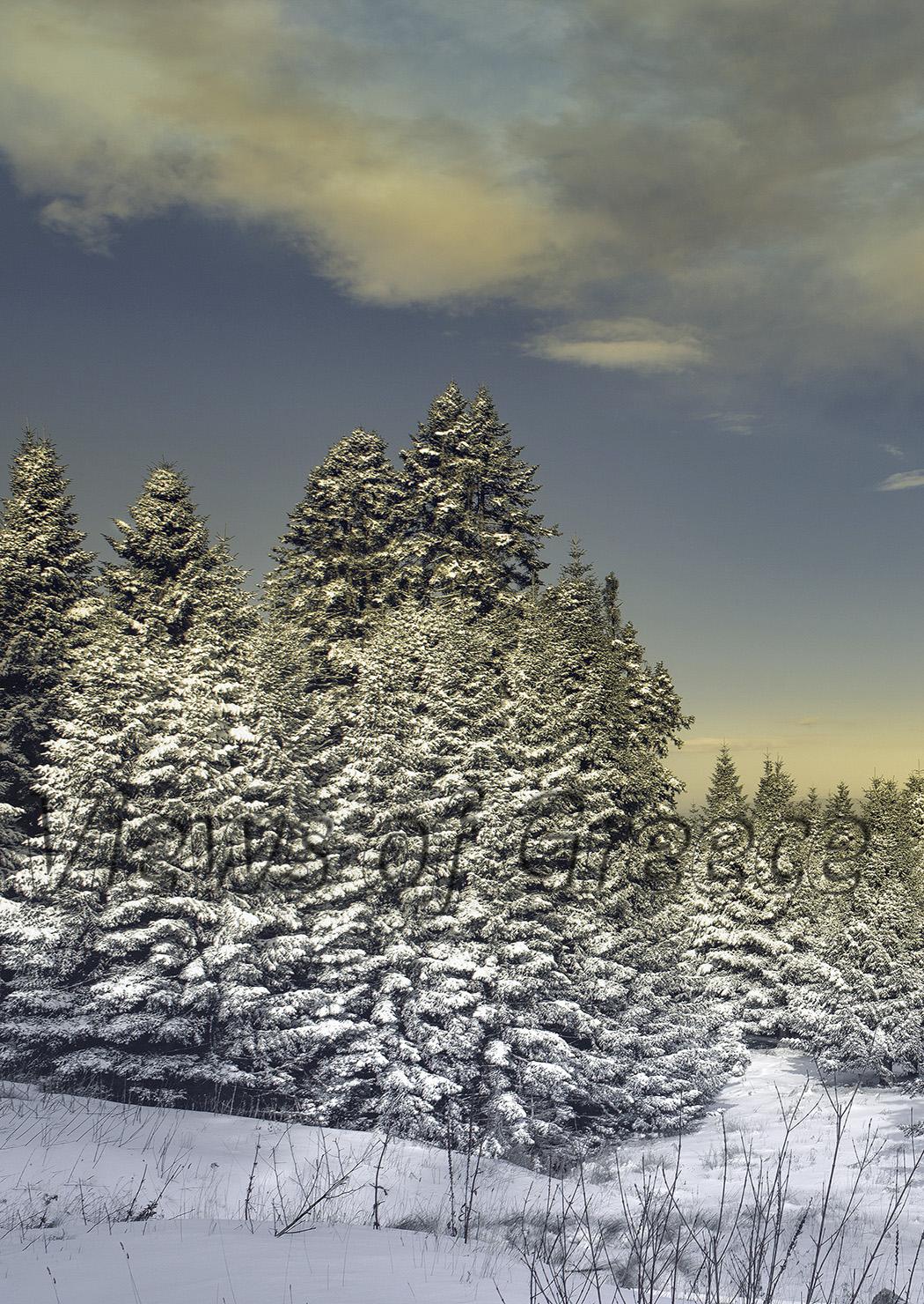 Χελμός, Καλάβρυτα, Σκι, Χιονοδρομικό κέντρο Διαδρομές, Χιόνι, Γεωπάρκο, περίπατοι
