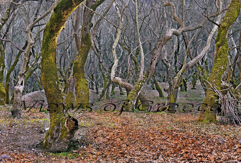 Mt Helmos, Κλειτορία, Πλανητέρο, Σπήλαιο Καστριά, Πλανητέρο, Διαδρομές, πηγές Αροάνιου