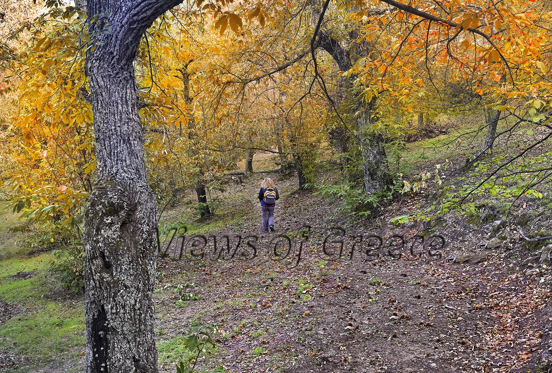 ΔΙΡΦΗ-ΧΛΩΡΙΔΑ-ΠΑΝΙΔΑ.-Περπατώντας-στα-Φθινονωρινά-δάση